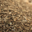 Pine needles. Wood chips — Stock Photo