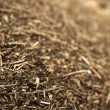 Stock Photo: Pine needles. Wood chips