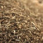 Pine needles. Wood chips — Stock Photo