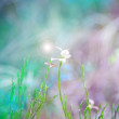 Motion blurred background of spring grass and flowers — Stock Photo