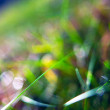 Sun at the spring green grass — Stockfoto