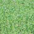 Yellow-green grass — Stock Photo