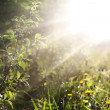 Stock Photo: Sunlight