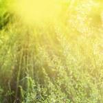 Sunlight — Stock Photo