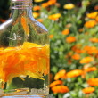 Natural medicine marigold - Stock Photo