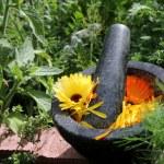 Natural medicine marigold — Stock Photo
