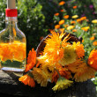 Stock Photo: Calenduloil