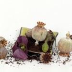 Poppy seeds — Stock Photo