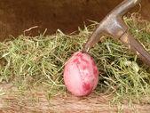血卵 — ストック写真