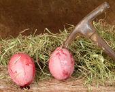 Blutigen eier — Stockfoto