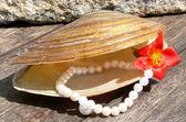 珍珠 — 图库照片