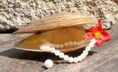 Perle — Foto Stock
