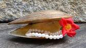Perły — Zdjęcie stockowe