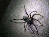 Spider — Stock Photo