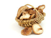 Shitake — Stock Photo