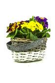 Flowers arrangement in small basket — Stock Photo