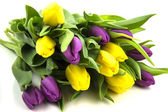 Yellow and purple tulips with green stems — Stock Photo