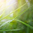 Grass with dew drops — Stock Photo
