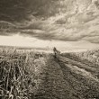Stock Photo: Landscape with rural road through field and cloudy sky