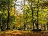 Autumn view — Stock Photo