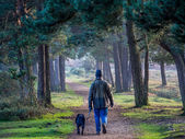 Walking a dog — Stock Photo