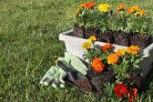 Kleurrijke bloemen — Stockfoto
