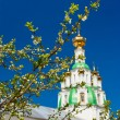 Branch of the cherry blossoms against white church — Stock Photo