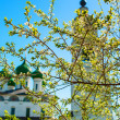 Stock Photo: Blossom cherry tree against white church