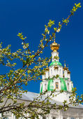 Branch of the cherry blossoms against white church — Stockfoto