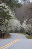 Road in the blooming trees — Stock Photo