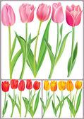 красивые тюльпаны в разные цвета — Cтоковый вектор