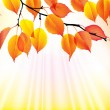 Autumn branch with yellow leaves background — Stock Vector