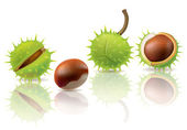 Chestnuts — Stock Vector