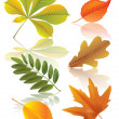 Set of autumn leaves — Stock Vector