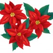 Red Poinsettia christmas flower — Stock Vector
