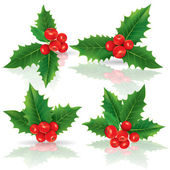Holly berries — Vector de stock