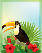 Tropical background with toucan — Stock Vector