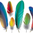 Colored feathers — Stock Vector