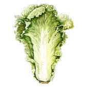 Cabbage leaf. watercolor painting — Stock Photo