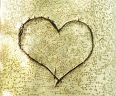Heart carved in bark of tree — Stock Photo