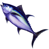 Tunny fish. watercolor painting — Stock Photo