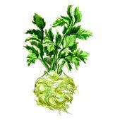 Watercolor celery isolated on white — Zdjęcie stockowe