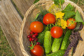Tomato, cucumber. vegetables  in basket — Stock Photo