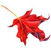 Hoja de arce roja como un símbolo de otoño — Foto de Stock