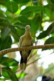 Bird sitting on a branch — Stock Photo