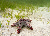 Starfish on the sand underwater — 图库照片