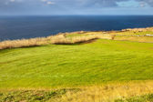 Hayfield near the Atlantic ocean coast, Azores, Portugal — Stock Photo