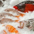 Fresh fishes on ice seafood background, Azores, Portugal — Stock Photo