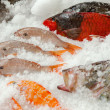 Stock Photo: Fresh fishes on ice seafood background, Azores, Portugal