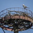 Stock Photo: Stork-Nest-Sparrow